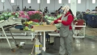 Floricultores colombianos enfrentan crisis económica por covid-19