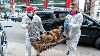 Abandonan a mascotas por el coronavirus