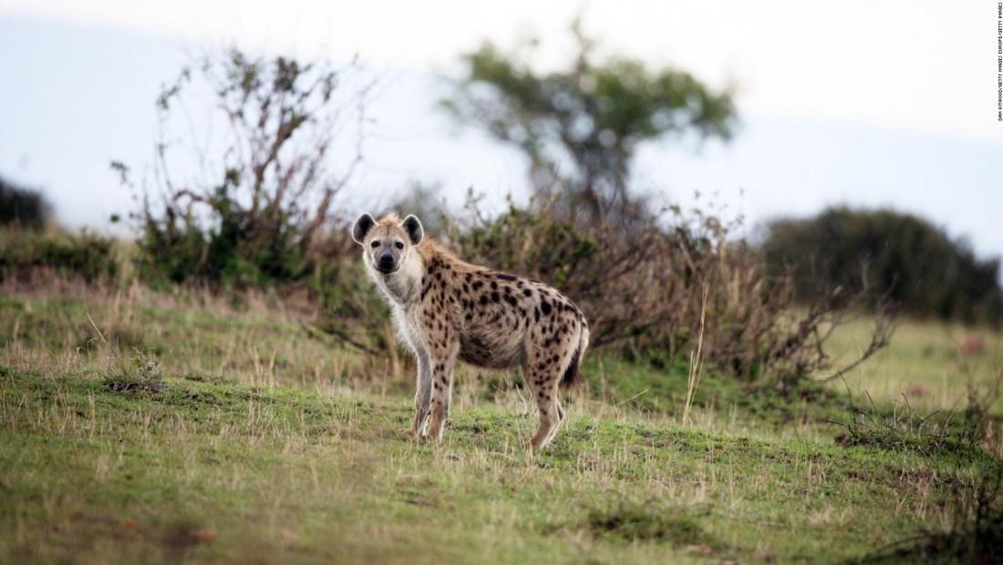 Visita este safari de África y sin salir de casa