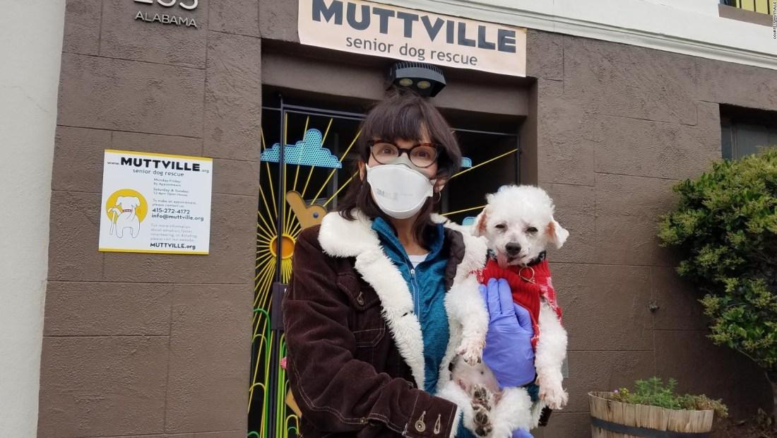 Adoptar perros durante la pandemia