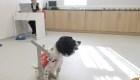 Perros podrían ayudar en la lucha contra el covid-19