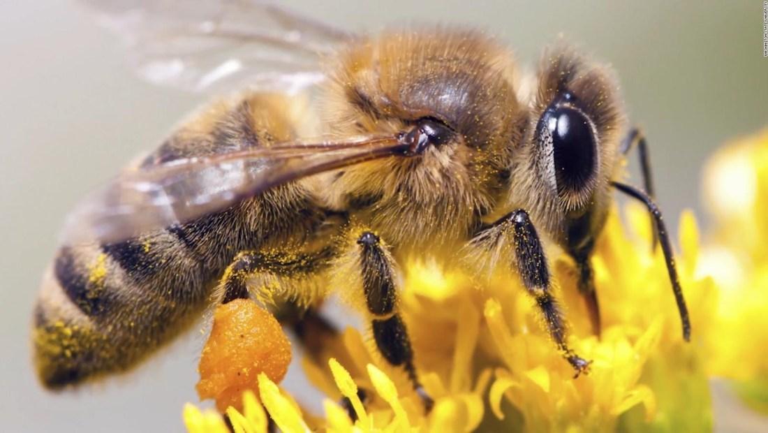 Todo lo que debes agradecerles a las abejas en su día