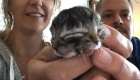 Mira este gatito de dos caras: ternura doble en video