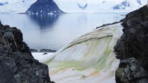 La nieve se está volviendo verde en la Antártida, y el cambio climático lo empeorará