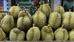durián - alemania