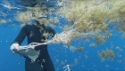Hallan microplásticos en un diminuto animal acuático