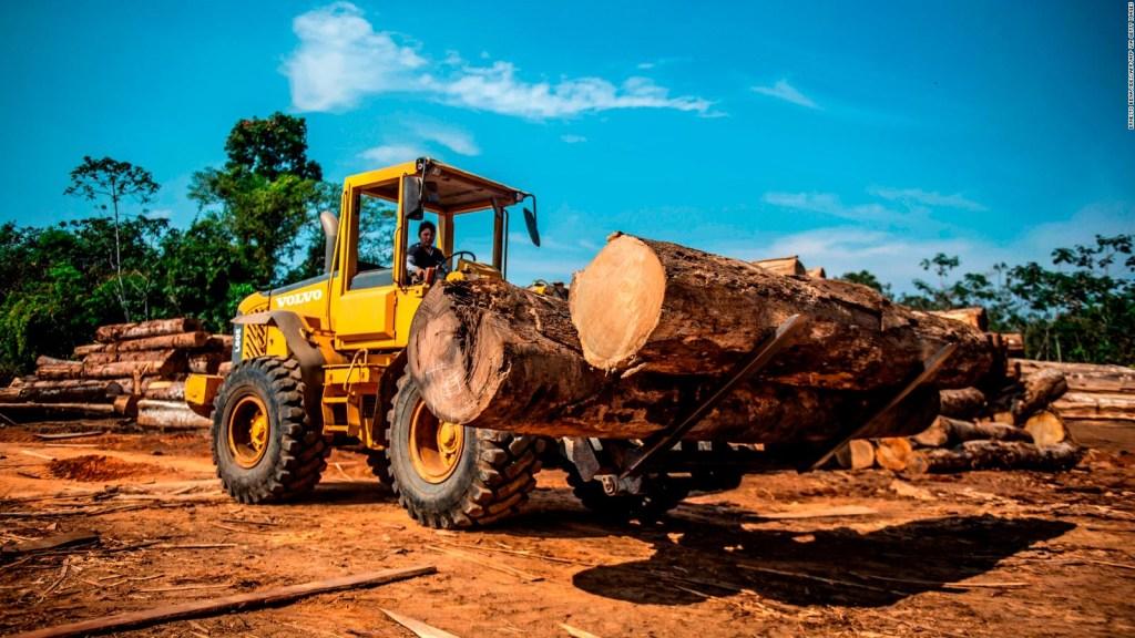 Deforestación alcanzó su peor registro en el 2019