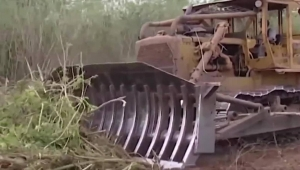 Deforestación en Argentina no dio tregua ante el coronavirus