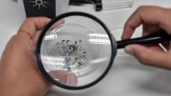 Estudio alerta sobre la contaminación con microplásticos