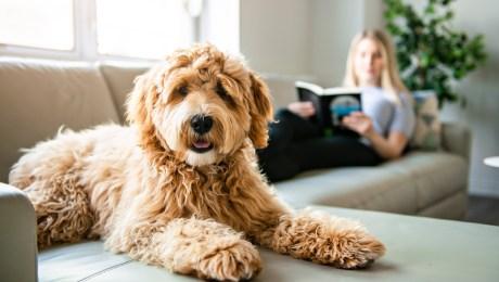 15 productos que te ayudarán a mantener tu ropa y tu hogar libres de pelo  de mascotas | CNN