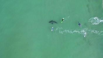 Video muestra a tiburón blanco acechando surfistas