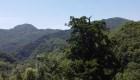 Hallan un pino de 1.900 años en China