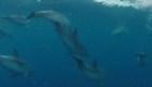 Viajero argentino cuenta cómo fue navegar acompañado por delfines