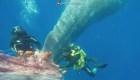 Buzos italianos rescatan ballena atrapada en una red