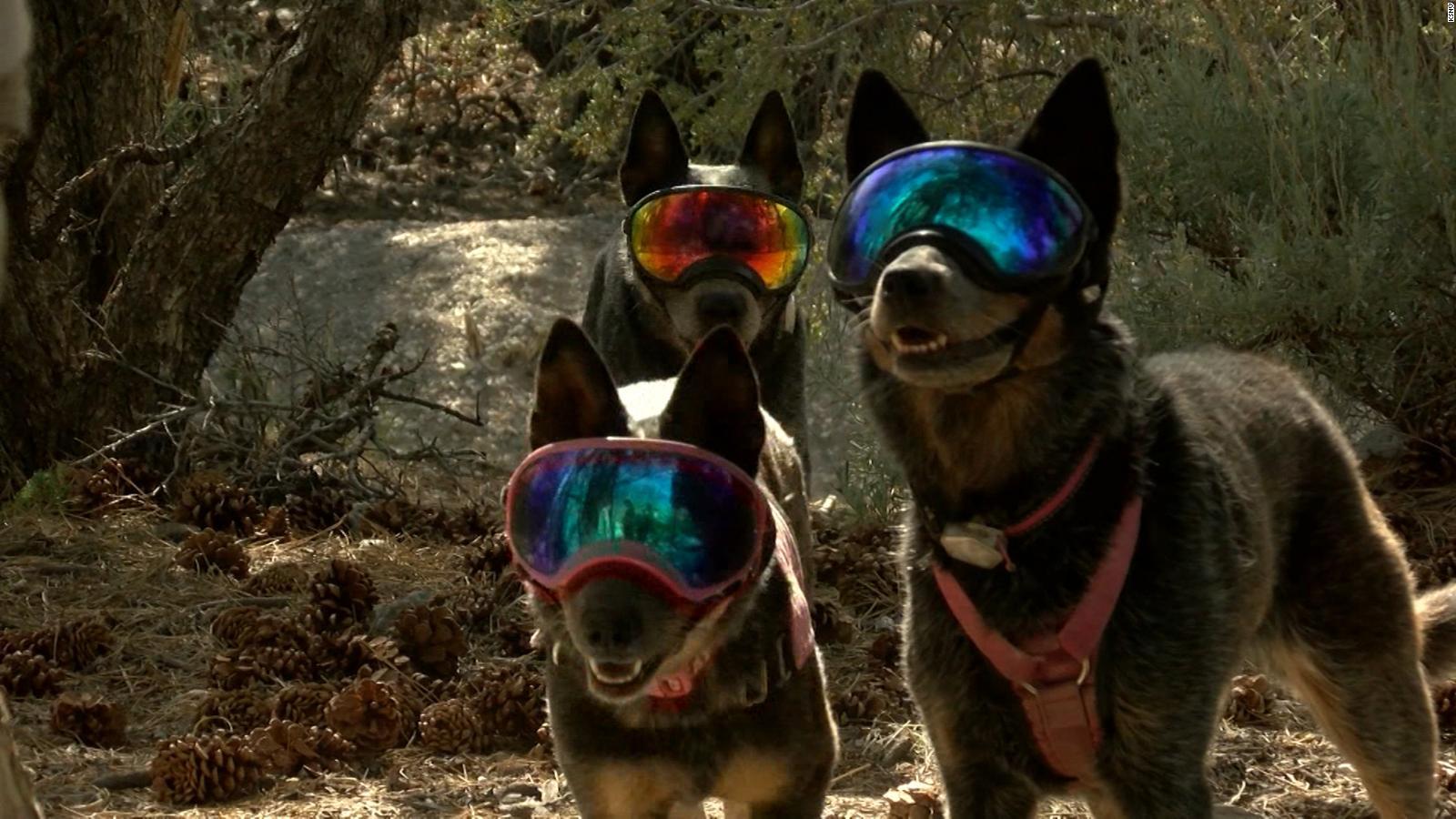 この聴覚障害者の犬は、山の中で専門のハイカーです...