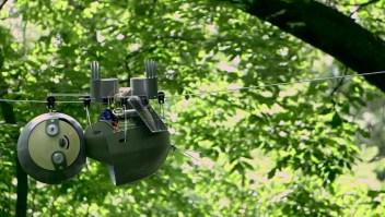 El perezoso robótico que busca monitorear especies