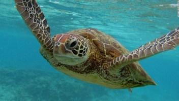Nuestros océanos son increíbles, pero necesitan nuestra ayuda