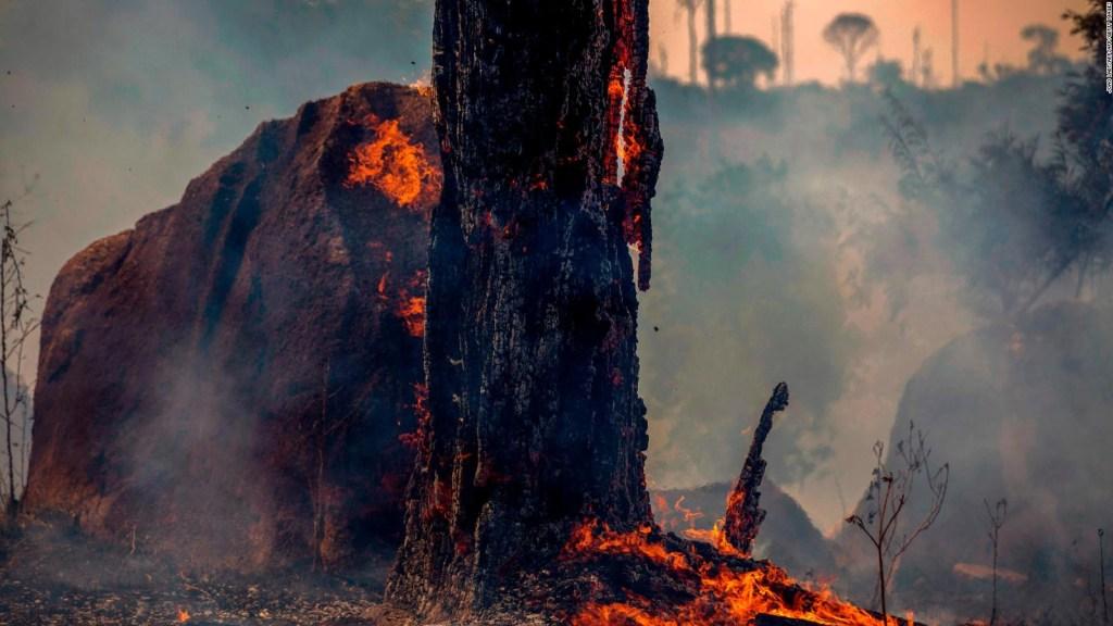 Brasil: prohíben los incendios en el Amazonas