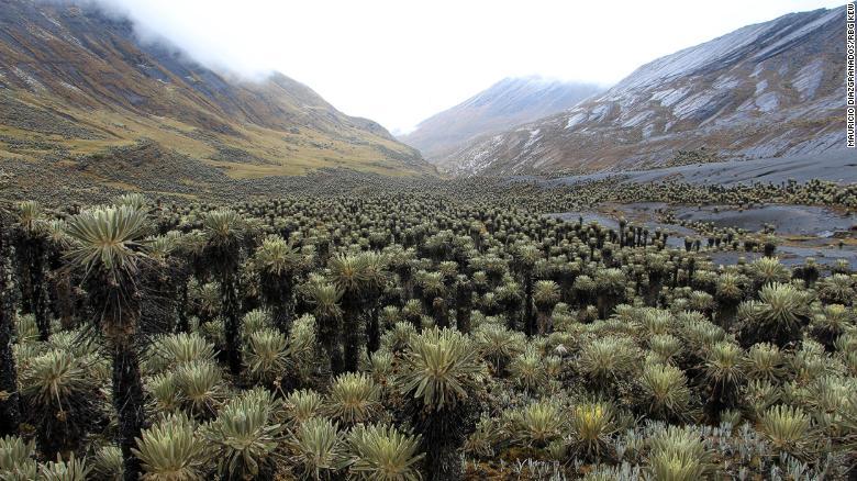 Páramo de Chiscas Colombia Parque del Cocuy