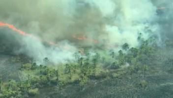 El covid-19 y la deforestación acabarían con el Amazonas