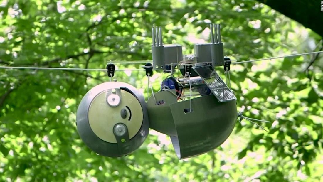 Este perezoso robot podría proteger ecosistemas en peligro