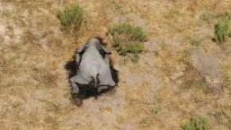 Mueren más de 360 elefantes en Botswana
