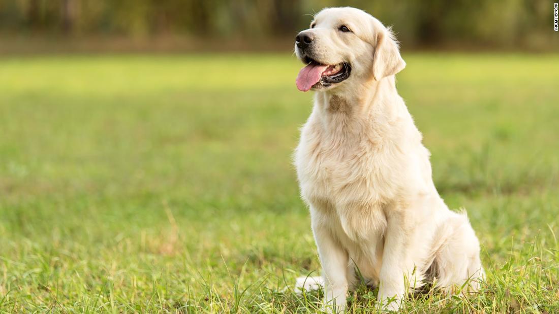 No, cada año de perro no es igual a 7 años humanos, dicen investigadores    CNN