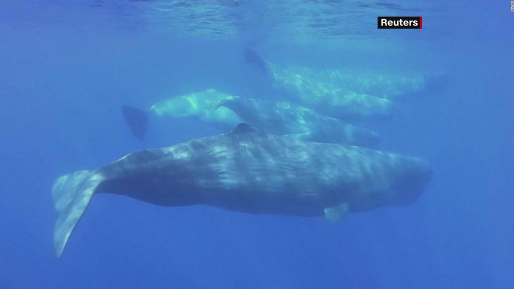 Crece presencia de la fauna marina en Italia