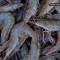 China frena importación de camarón de empresas de Ecuador