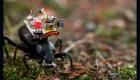 Científicos crean videocámaras miniatura para insectos