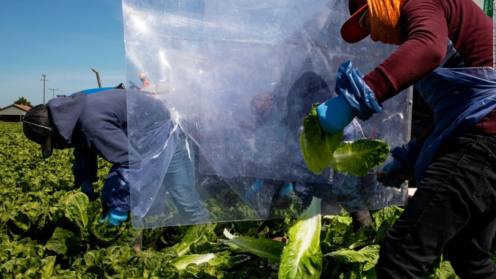 Navarro defiende el trabajo de los indocumentados durante la pandemia