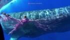 En Italia, rescatan a una ballena atrapada en una red