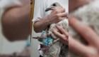 Rescatan a una gaviota atrapada en una mascarilla