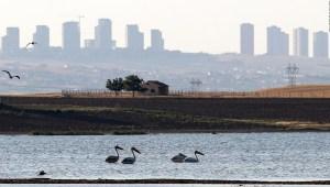 Por qué no cuidar el medio ambiente durante la pandemia