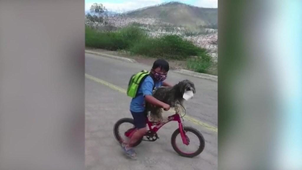 Video: un niño protege a su mascota en plena pandemia