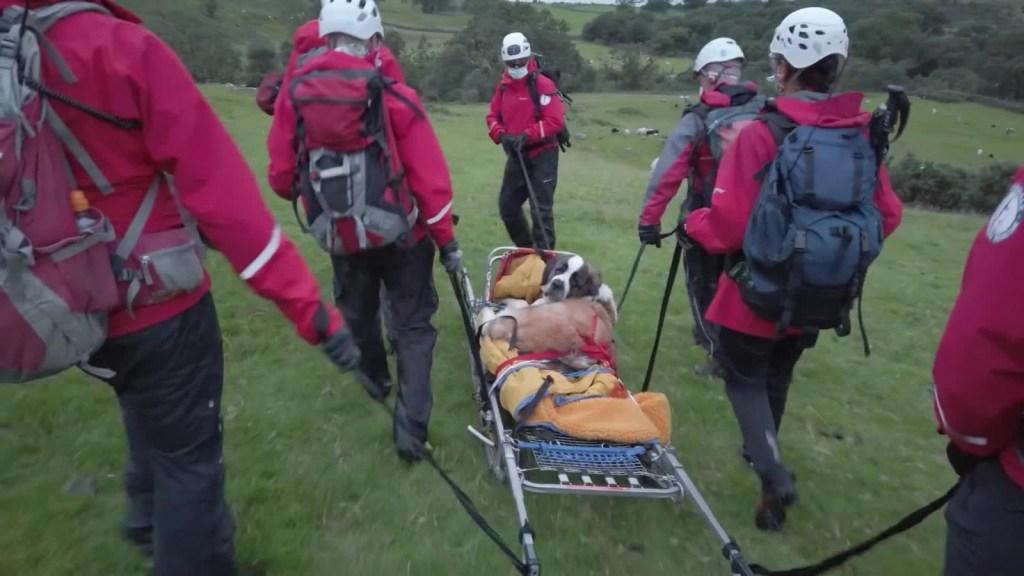 Perra san bernardo rescatista es rescatada en Inglaterra
