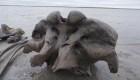 Hallan un raro esqueleto de mamut en Siberia