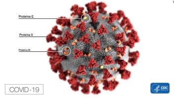 covid proteina coronavirus