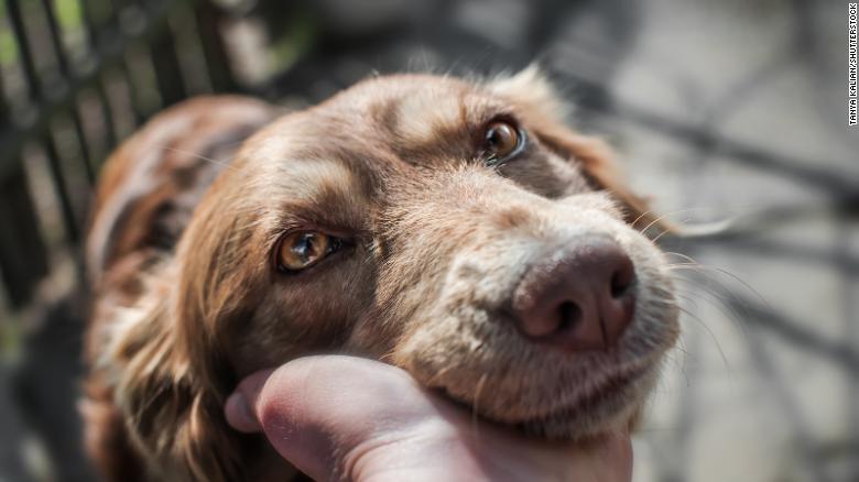 resistencia durante pandemia coronavirus perros