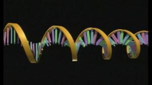 Científicos desarrollan modelo 3D del genoma humano