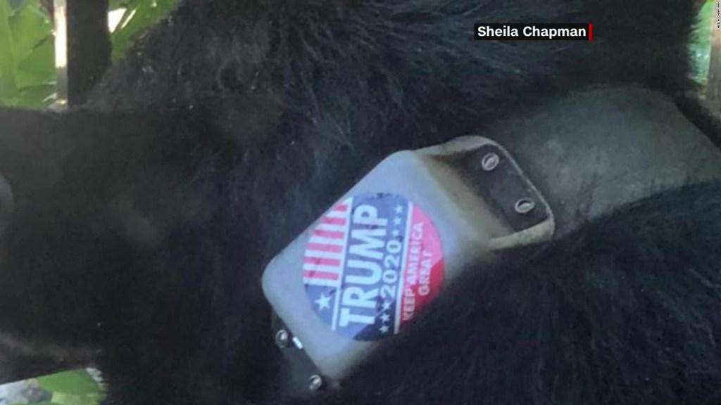 ¿Quién pegó un aviso de Trump 2020 en un oso?