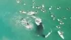 Mira la inesperada visita de ballenas a unos surfistas