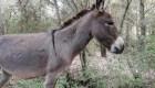 La peculiar terapia con burros para combatir el estrés