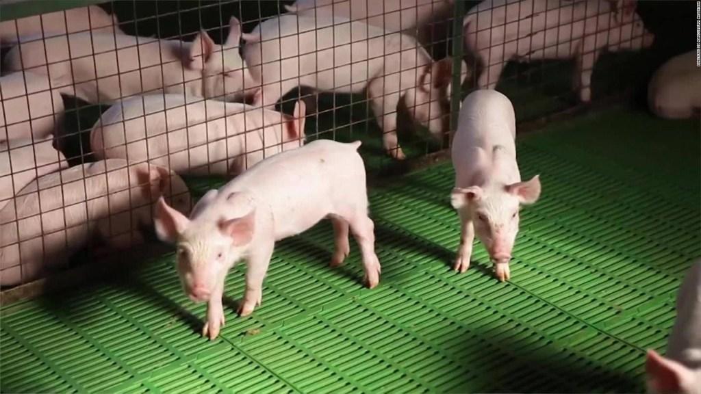 Argentina buscaría duplicar su producción de carne de cerdo