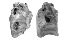¿Podría ser este dinosaurio un pariente del T. rex?