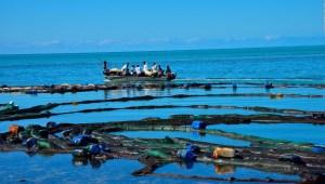 Catástrofe ecológica en la Isla Mauricio