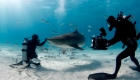 Conoce al arriesgado hombre que filma los tiburones