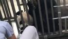Zoológico de Washington anuncia embarazo de panda gigante