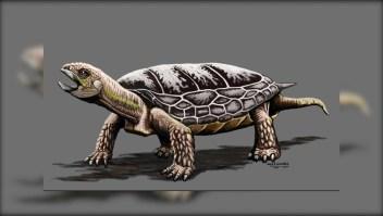 Hallan una tortuga de hace 205 millones de años