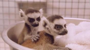 Zoológicos presentan a sus nuevos integrantes